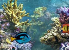 Ökomag – a halak is szeretik…