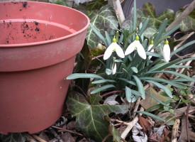Tavaszindító: hóvirág és AGRO