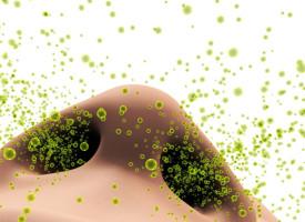 Másfél évtized allergia vs három hét Olajfa