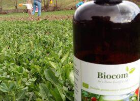 A rózsát is felélesztette az AGRO Szabados Matildéknál – nevezés a versenyre