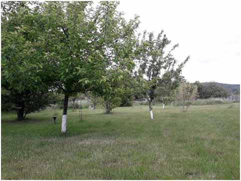 A fák és az SCD AGRO – a gyümölcsösben is kitűnően teljesít a probiotikus készítmény