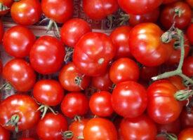 Ortelli Erzsébeték egészséges növényei – SCD AGRO pályázat, 2020