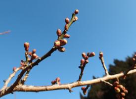 Jön a tavasz, itt az SCD AGRO szezonjának kezdete!